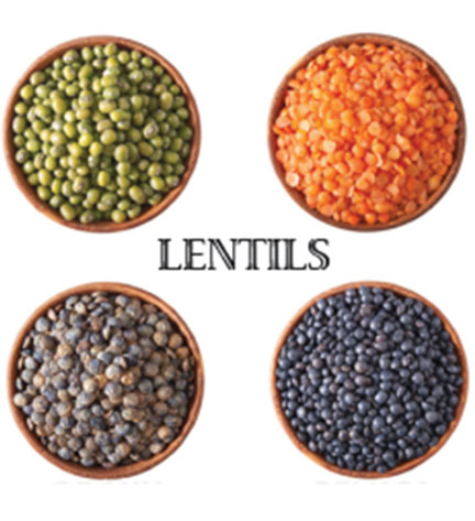 Different varieties of Lentils