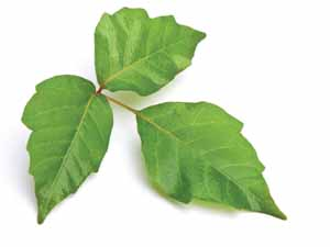 remedies to relieve the Poison Ivy itch